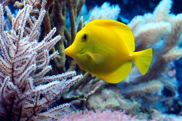 Acquario di Bari: Biomi dal mondo, la biodiversità un tesoro da tutelare