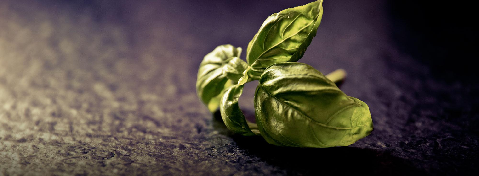 Ricetta: Liquore al Basilico