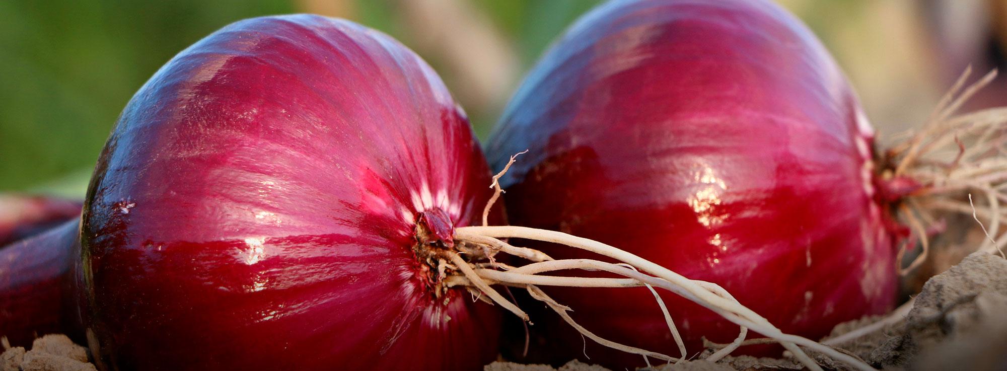 Ricetta: Cipolla rossa di Acquaviva caramellata