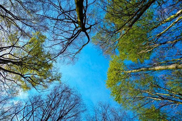 Foresta urbana a Taranto per ripulire l'area dell'Ilva 260 lecci