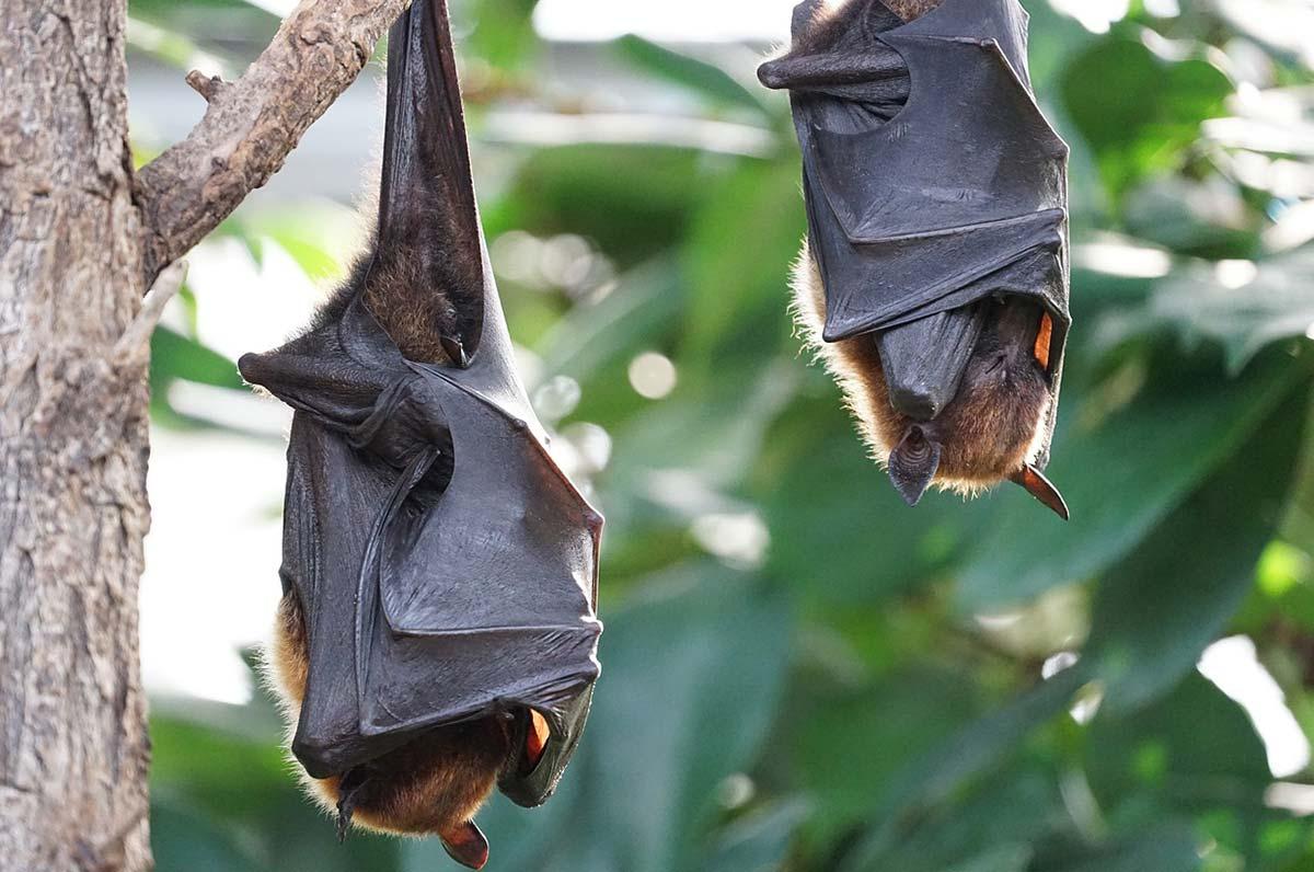 Pipistrelli in Puglia, tra leggende, record e mari limpidi