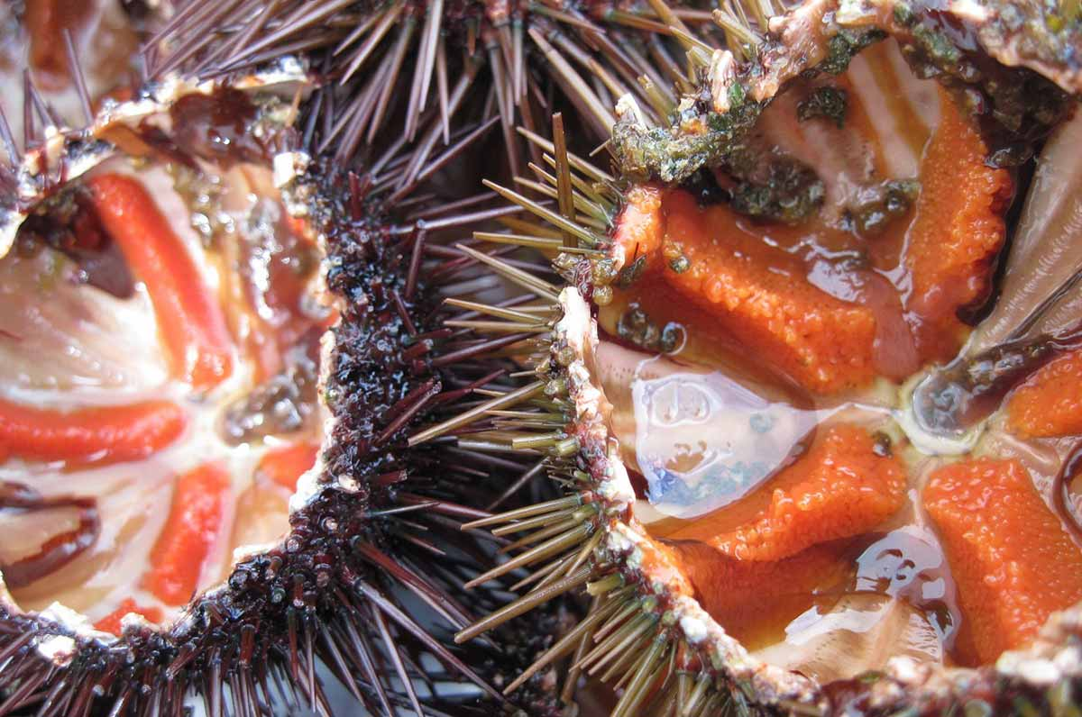 I 5 prodotti del mare più amati dai pugliesi: tutto il sapore dai ricci alle cozze