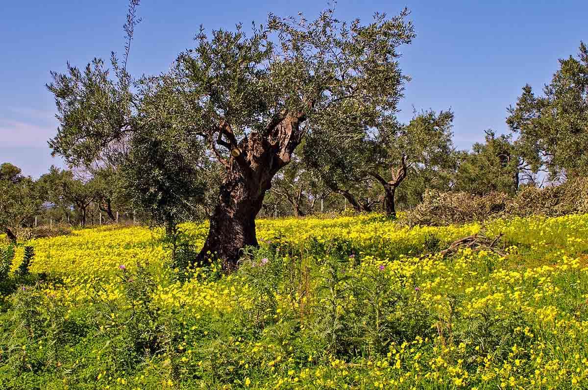 Xylella e aeroporto di Foggia, la Regione Puglia stanzia i soldi