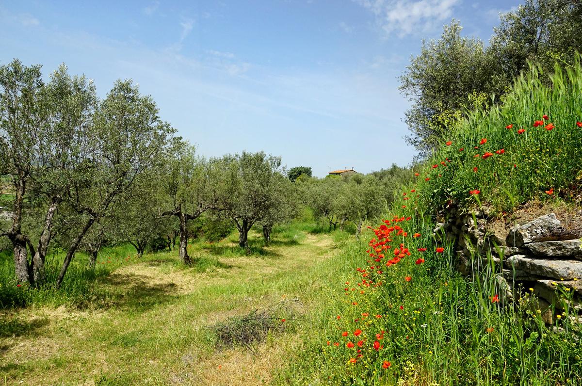 Flora pugliese, tra terreni calcarei, aree protette e macchia mediterranea