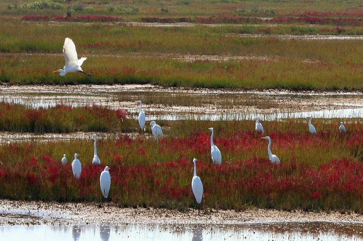 Oasi Lago Salso, parco affiliato WWF sul Golfo di Manfredonia