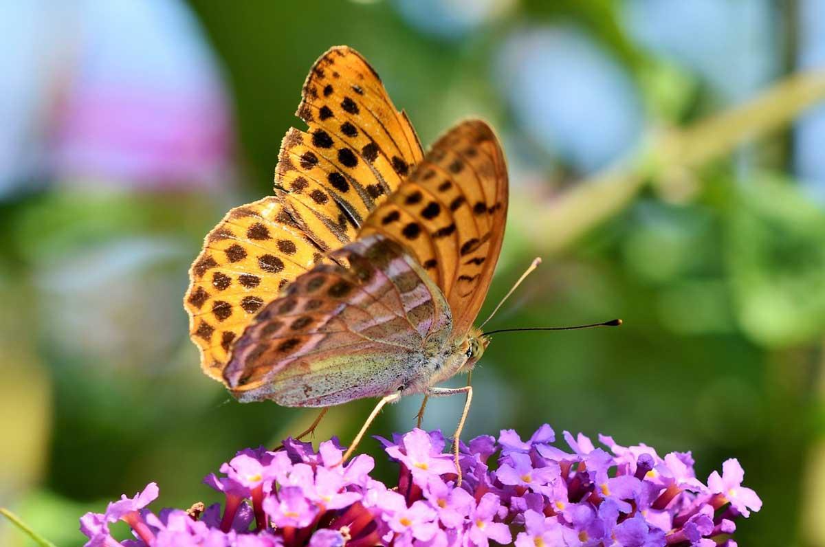 Casa delle farfalle, in provincia di Lecce uno spaccato di foresta pluviale