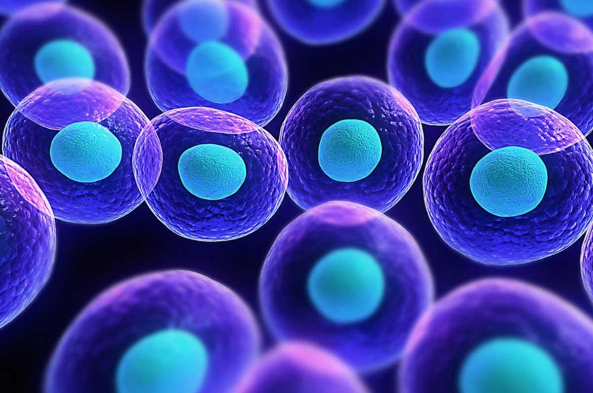 Cellule staminali, nuove scoperte a Casa Sollievo della Sofferenza