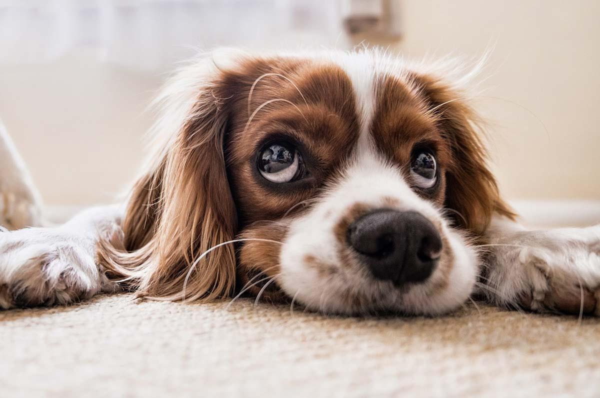 Coordinamento associazioni animaliste: stato di emergenza randagismo