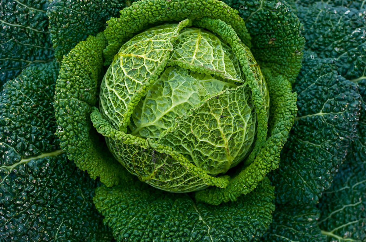 Verdure autunnali, cinque coltivazioni pugliesi che tornano a tavola