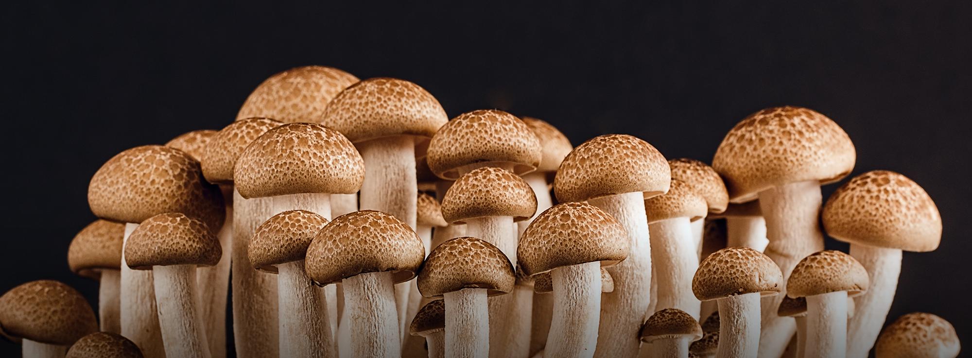 Ricetta: Omelette ai funghi cardoncelli