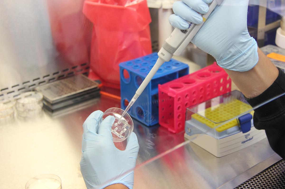 Istituto Zooprofilattico, a Foggia nasce l'officina farmaceutica veterinaria