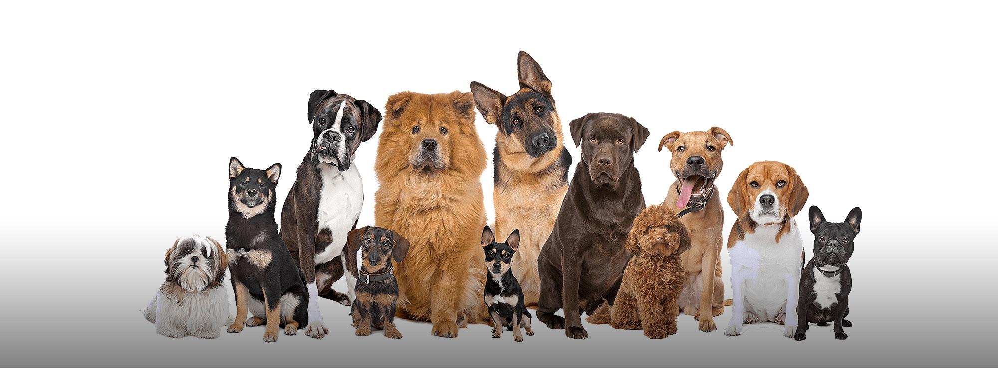 Foggia: 57^ Esposizione Internazionale Canina