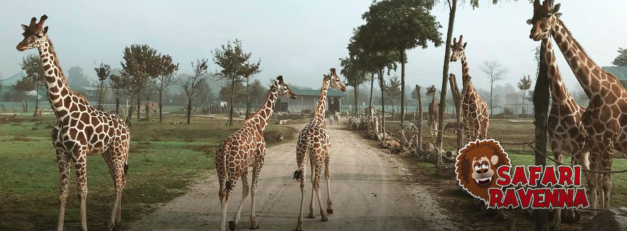 Safaripark Ravenna Ravenna