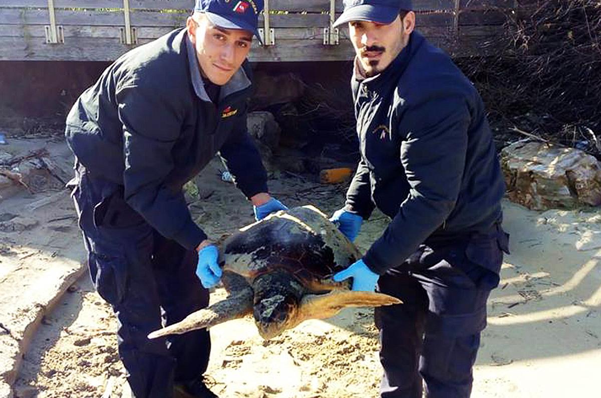 Tartarughe marine, salvataggi a Capitolo e Bari