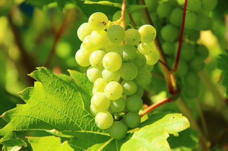 Confettura d'uva extra, dolce tradizione di Puglia