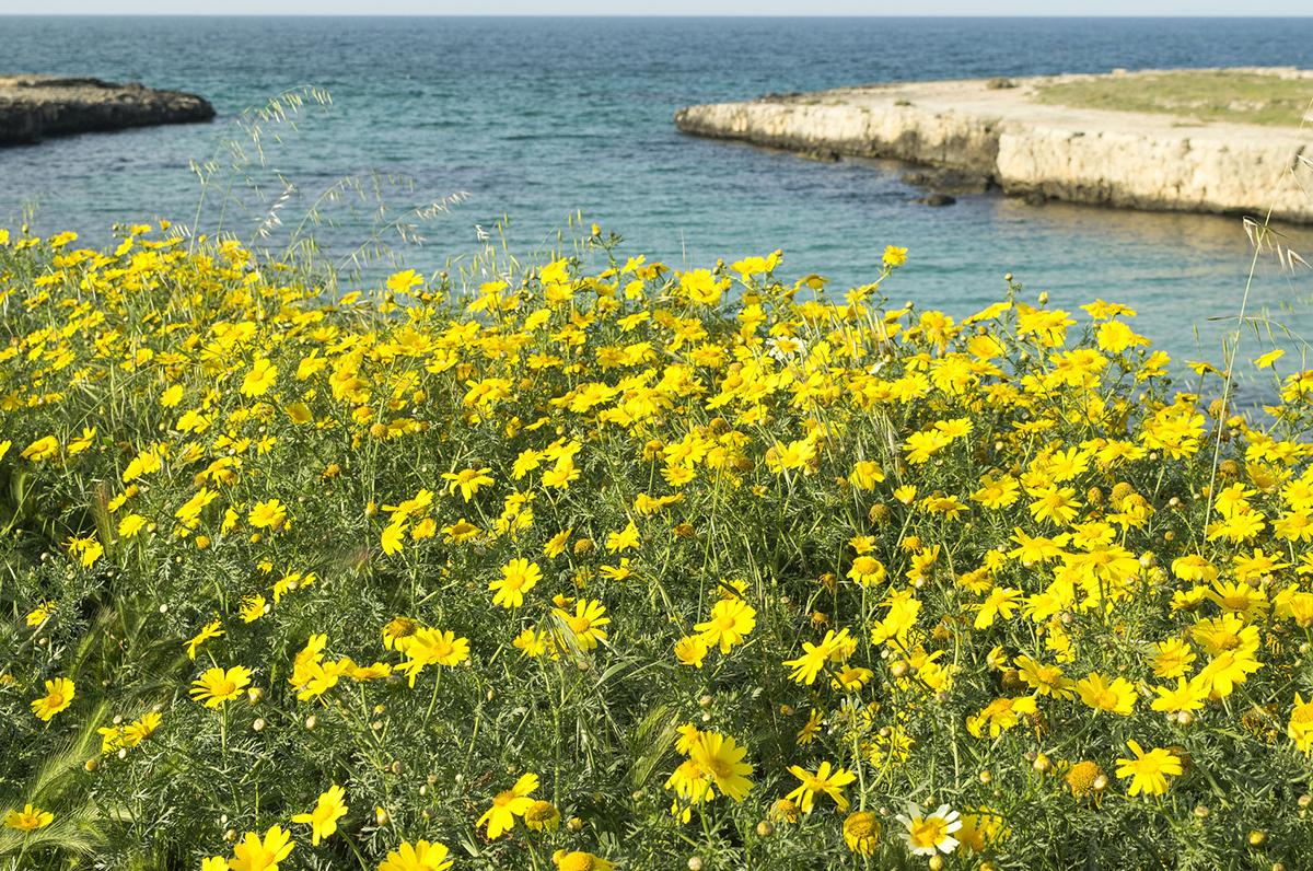 Primavera in Puglia, come e dove trascorre le belle giornate