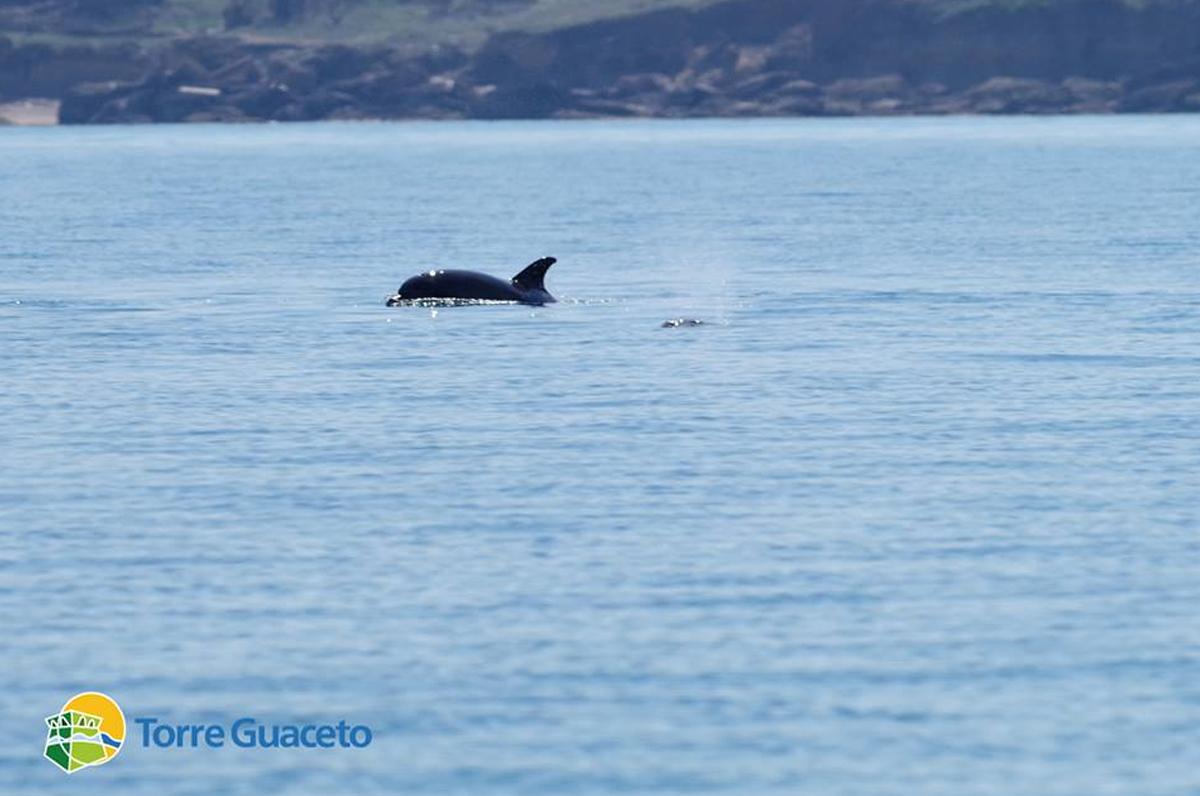 Torre Guaceto, l'area marina  preferita dai delfini