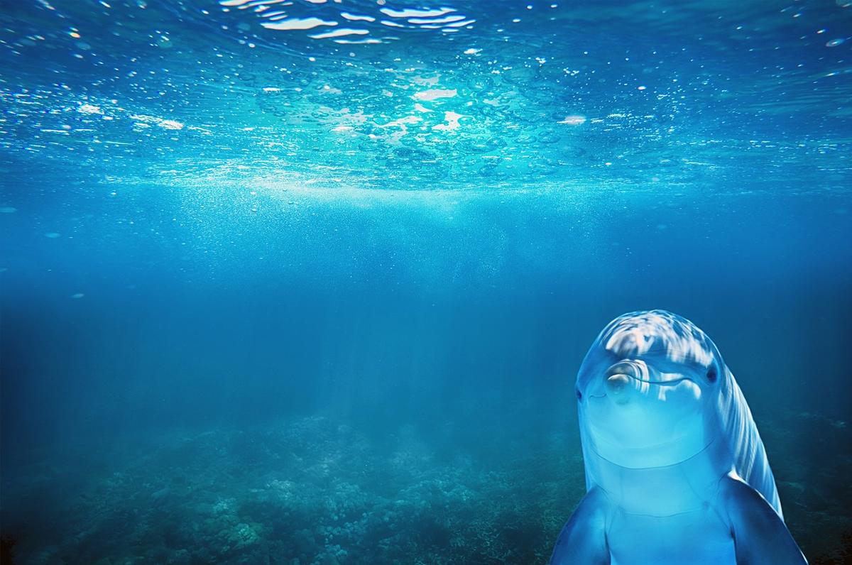 Delfini del Golfo di Taranto