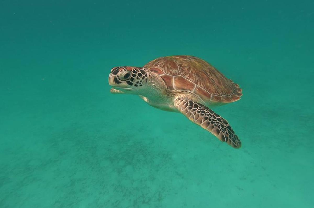 Tartarughe marine, contributo per i pescatori che le salvano