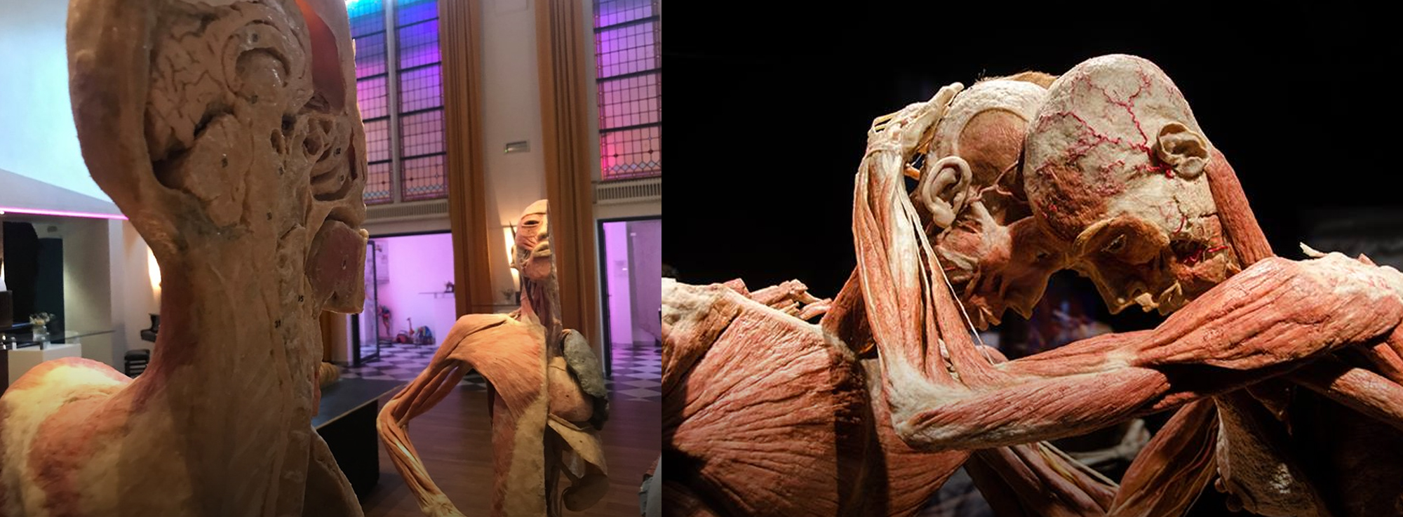 Barletta: Bodies Exhibition