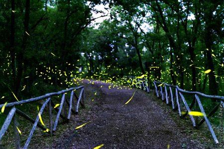 Bosco delle lucciole, atmosfera lucente e magica a Mottola