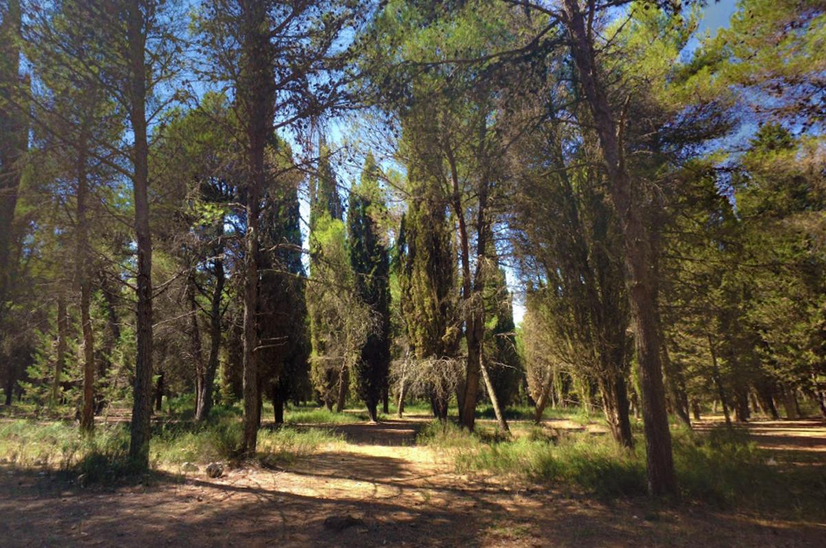 """Foresta di Mercadante, il """"polmone verde"""" di Bari"""
