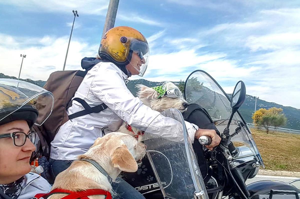 Viaggiare con gli animali si può: l'iniziativa di due pugliesi