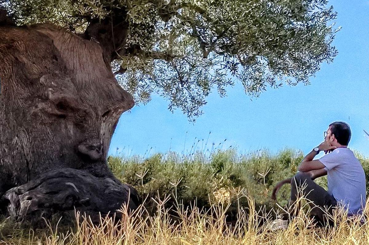 """""""Ulivo Pensante"""", scultorea meraviglia naturale a Ginosa"""