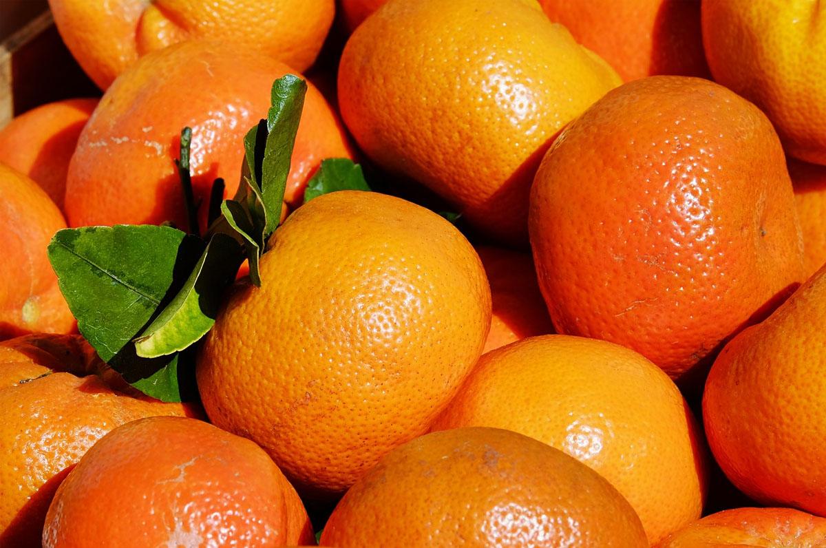 Clementine del golfo di Taranto, qualità IGP di Puglia