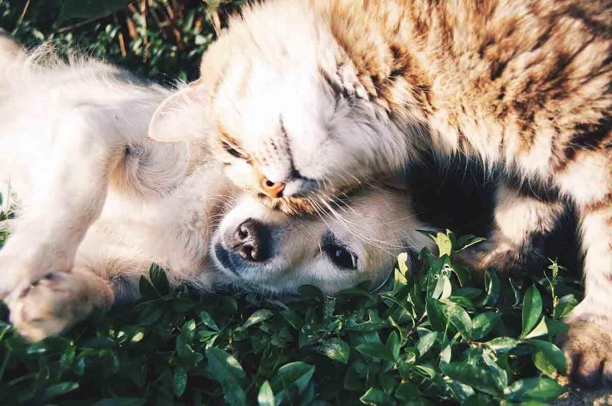 Randagismo in Puglia, nuove norme per la tutela degli animali