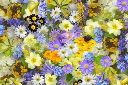 coldiretti vendita fiori
