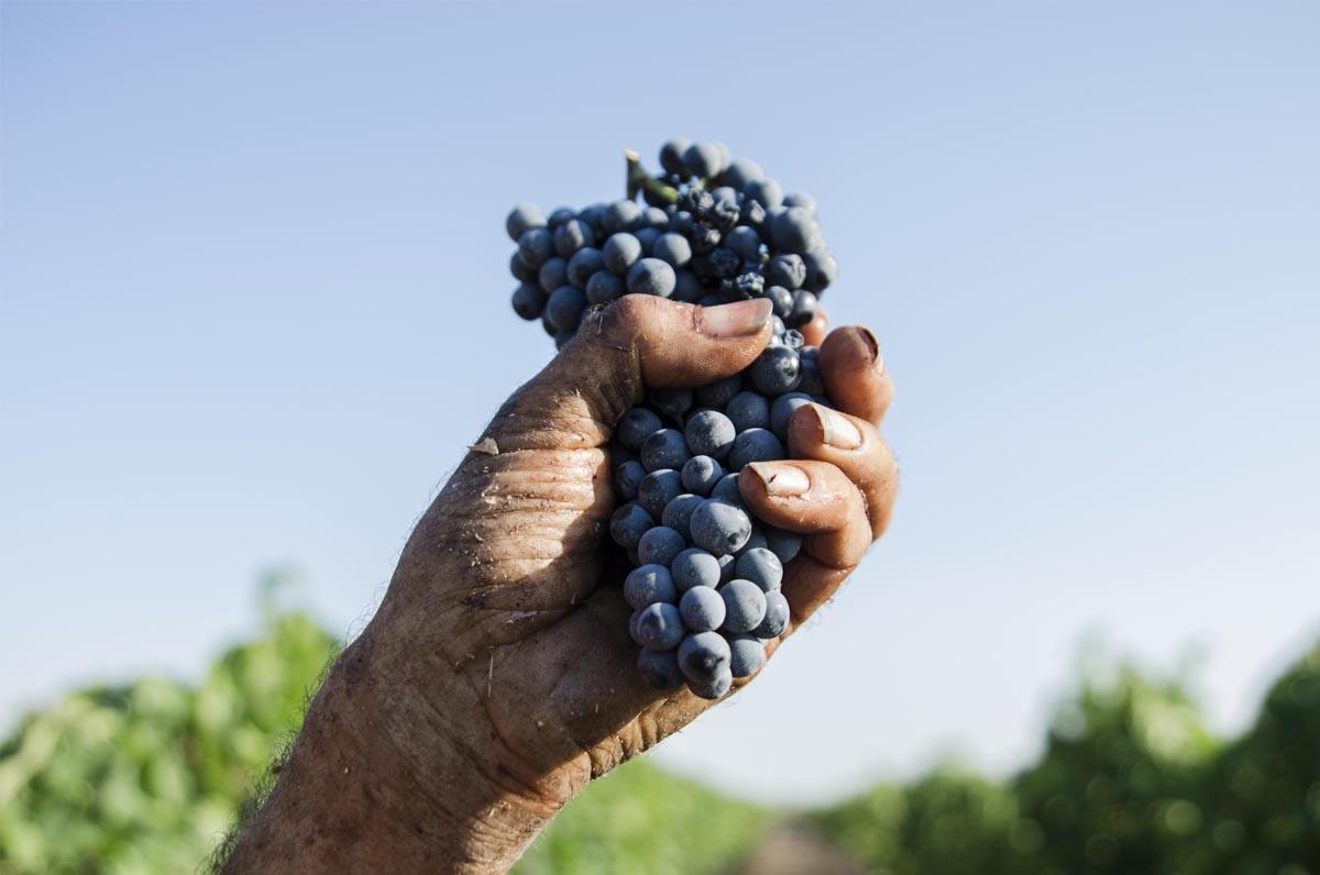 Cantine San Marzano, Primitivo di qualità made in Puglia