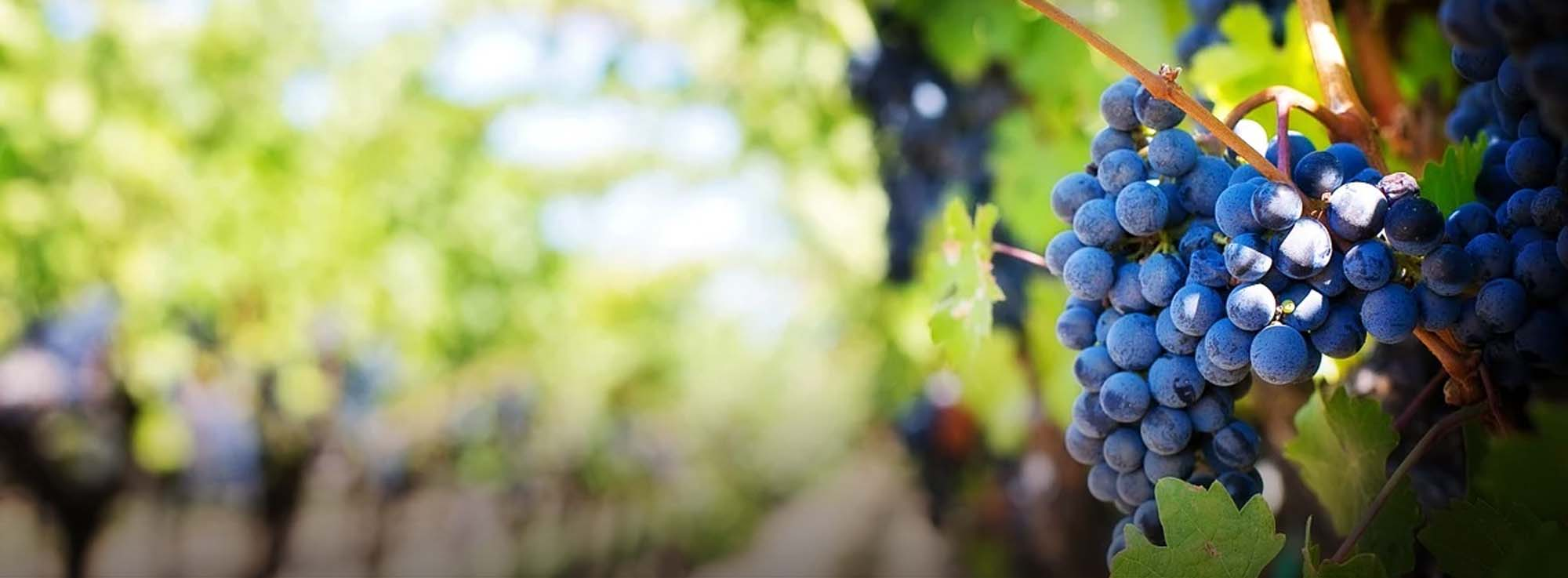 Otranto: Segni Otranto Wine Telling Festival