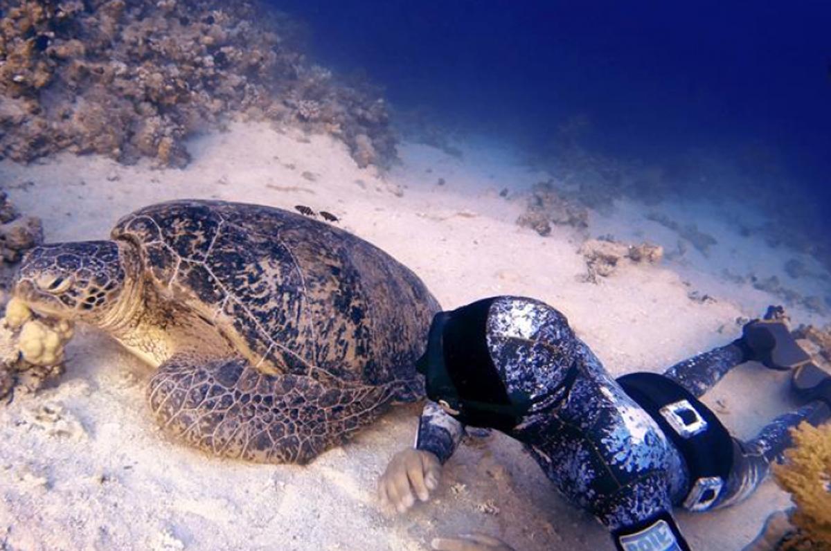 Michele Giurgola e l'incontro con la tartaruga gigante