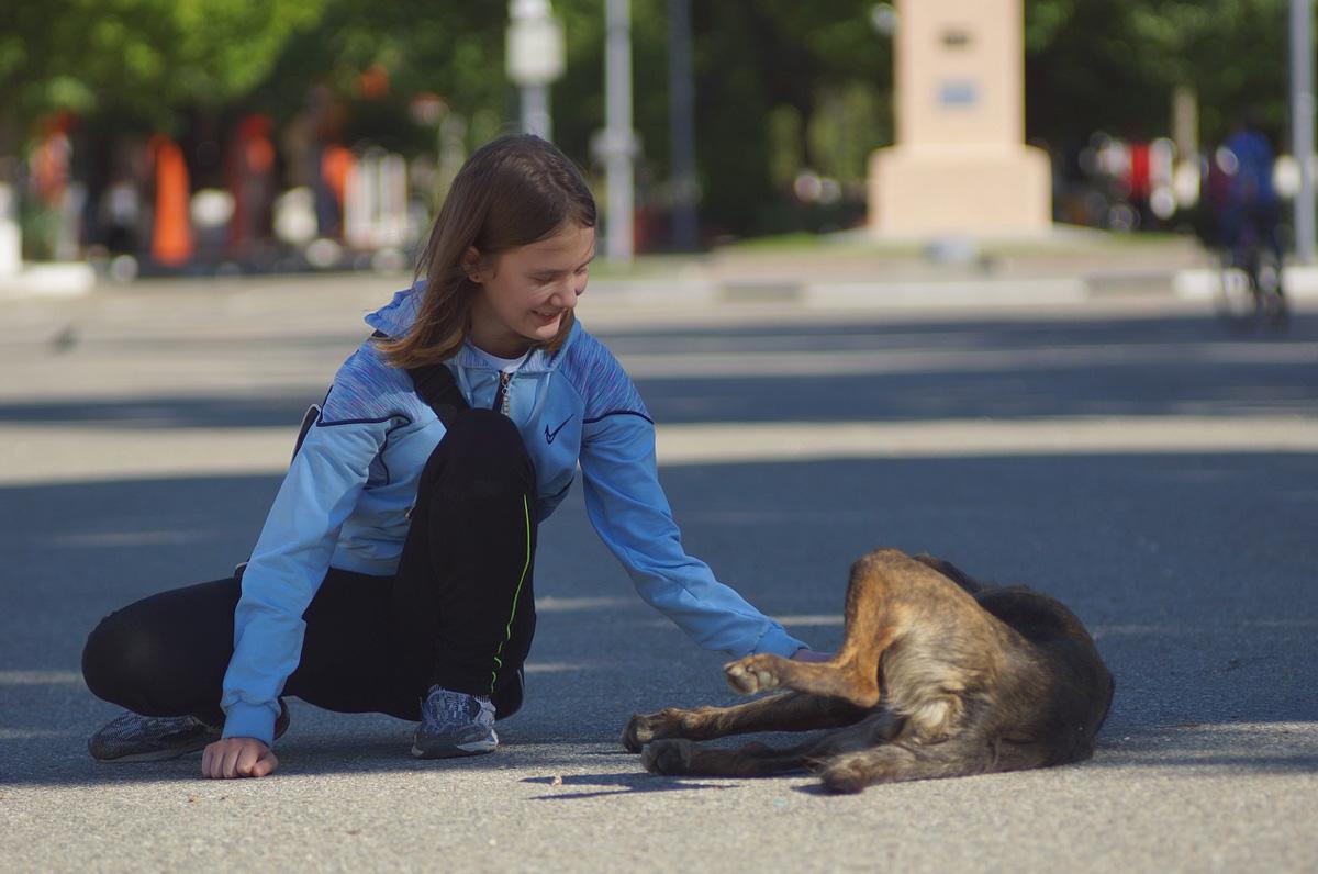 Animal Help, a Vieste numero per animali in difficoltà