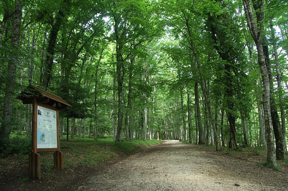 La Foresta Umbra ospita le riprese di un film horror