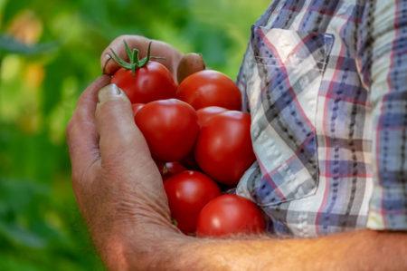 Puglia prima in Italia per il biologico