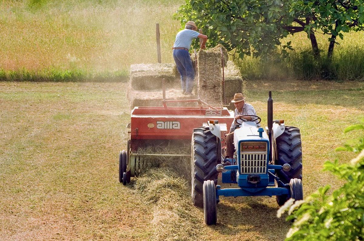 Cia Puglia, aumento dell'agricoltura