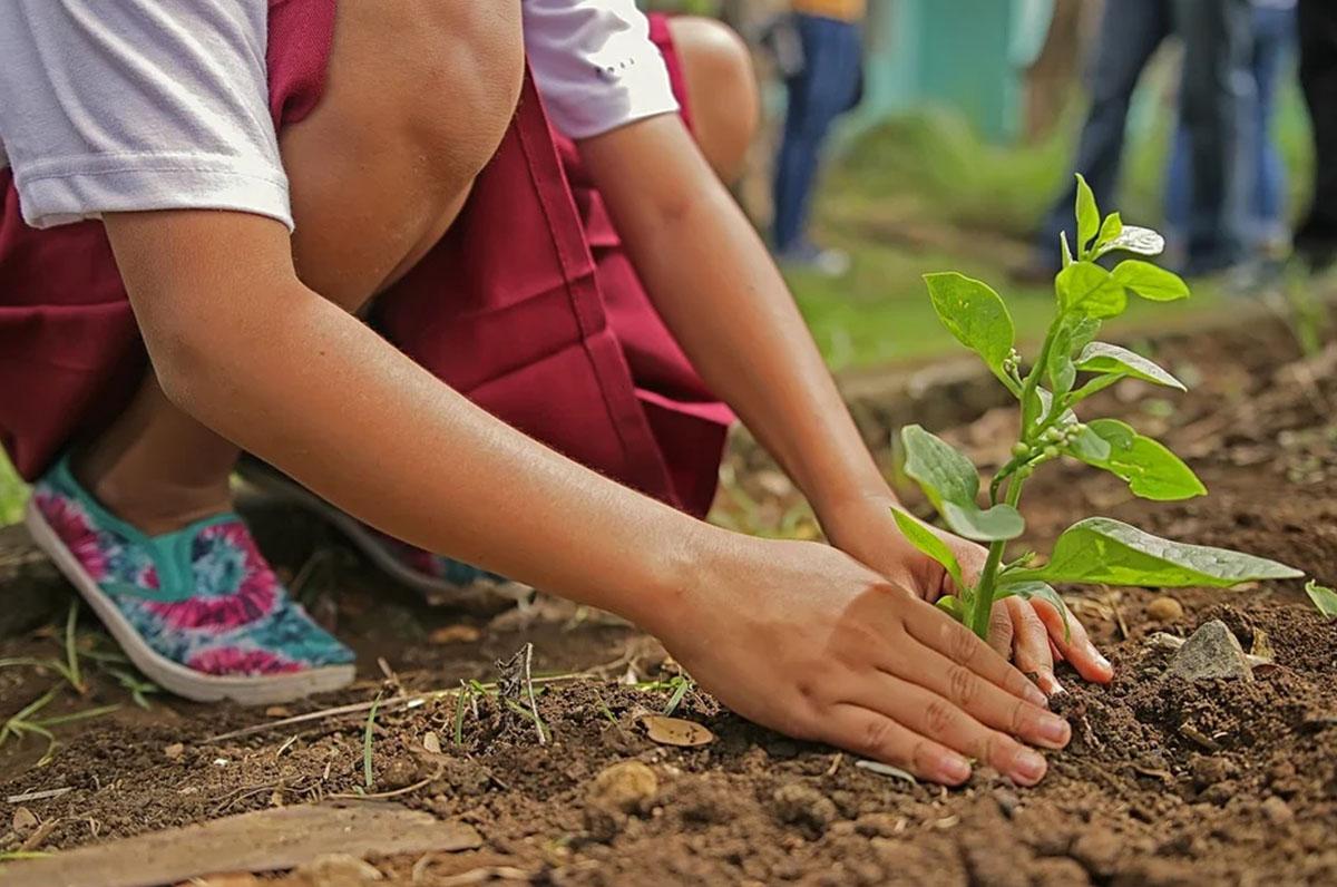 Francavilla Fontana, piantare albero
