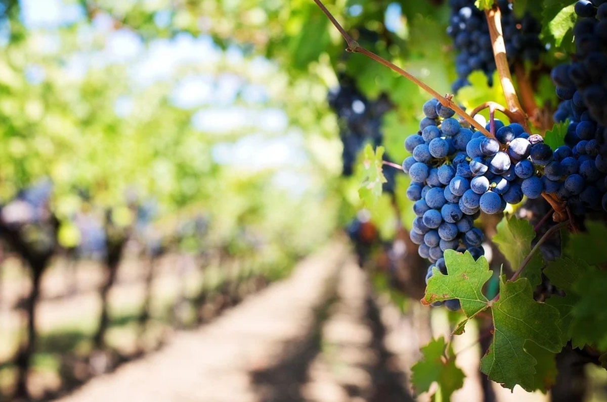 Forbes esalta i vini pugliesi