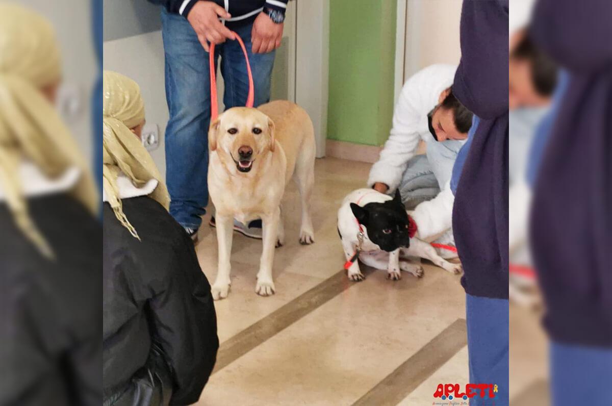 Bari, oncoematologia pediatrica: pet therapy in corsi